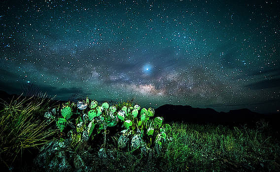 Prickly Pear Beneath the Milky Way by David Morefield