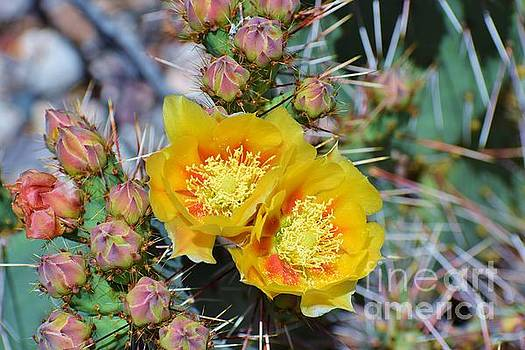 Janet Marie - Prickly Pear Entourage