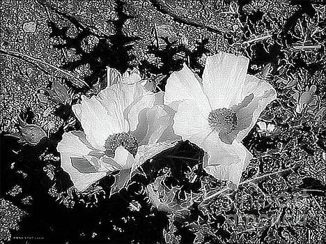 Prickly Poppies BW by Mona Stut