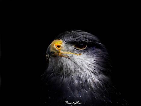 Pride by Bernd Hau