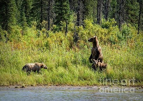Protective Mom - Bears by Jan Mulherin