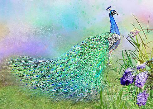 Proud Peacock by Morag Bates