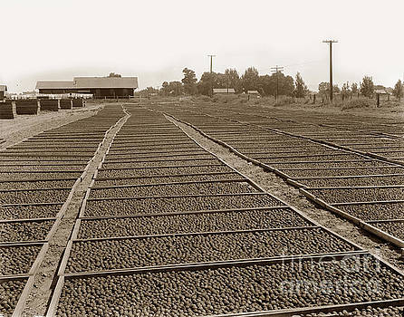 California Views Archives Mr Pat Hathaway Archives - Prune Drying, Visalia, California