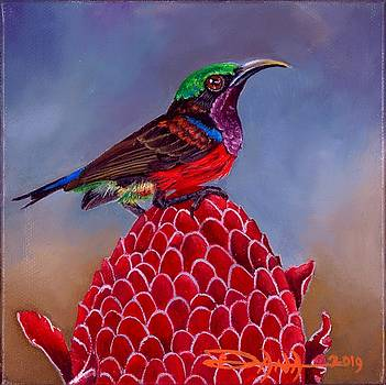 Pruple Throated Sunbird on Red Torch Ginger by Dana Newman