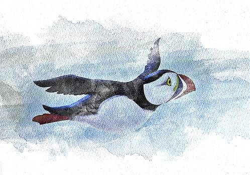 Puffin Watercolor by Diane LaPreta