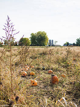 Pumkins in Field by Whitney Leigh Carlson
