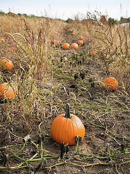 Pumpkin Farm by Whitney Leigh Carlson