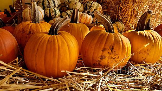 Pumpkin Patch by Christine Buckley