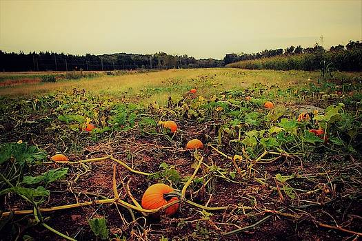 Pumpkin Picking by Candice Trimble