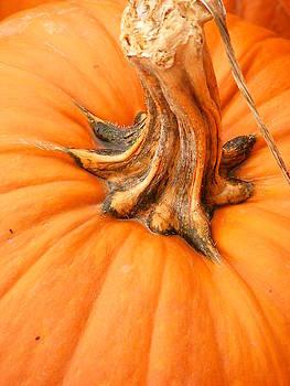 Lori Kingston - Pumpkin Stem