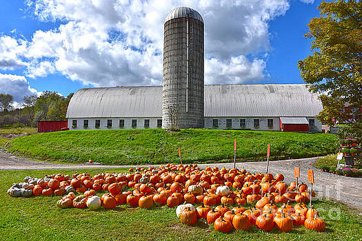 Pumpkins For Sale at Pennsylvania Farm Barn by Catherine Sherman