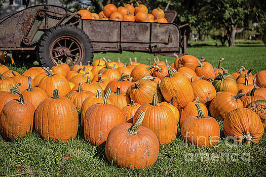 Pumpkins for Sale Central Vermont by Edward Fielding