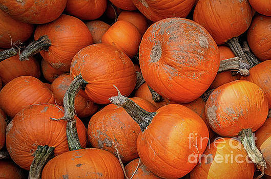 Kathleen K Parker - Pumpkins for Sale