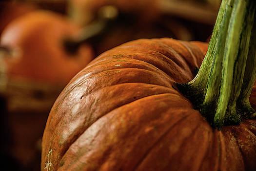 Pumpkins I by Dawn Wayand