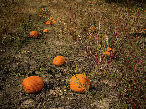 Pumpkins lying in a field by Whitney Leigh Carlson