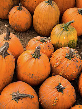Pumpkins of Different Shapes by Whitney Leigh Carlson