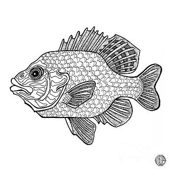 Amy E Fraser - Pumpkinseed Fish