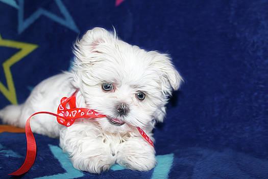 Puppy by Tatiana Tyumeneva
