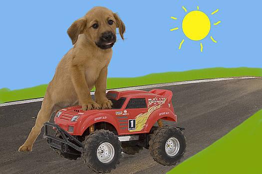 Puppy with toy truck by Nikki Attree