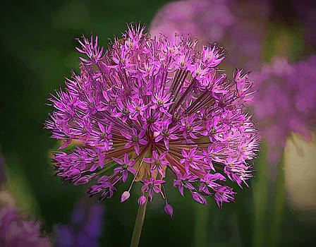 Purple Allium by Mary Lynn Giacomini