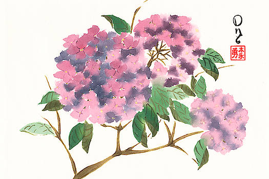 Purple Hydrangeas by Derek Motonaga
