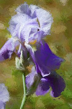 Purple Iris Waltz by Kathy Clark