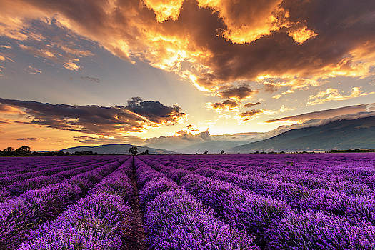 Purple Land, Golden Sky by Evgeni Dinev