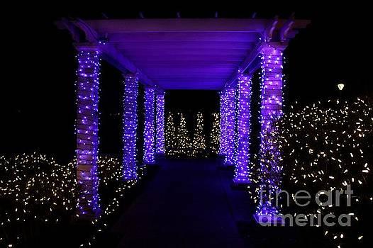 Purple Lights on Pergola by Denise Irving
