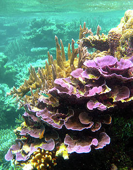 Susan Burger - Purple Lobe Coral