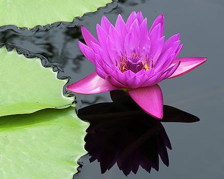 Purple Majesty by Paul Croll