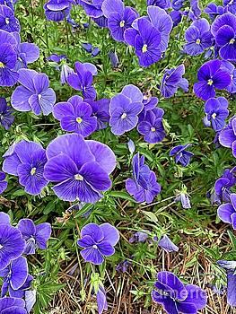 Purple Pansies by Linda Covino