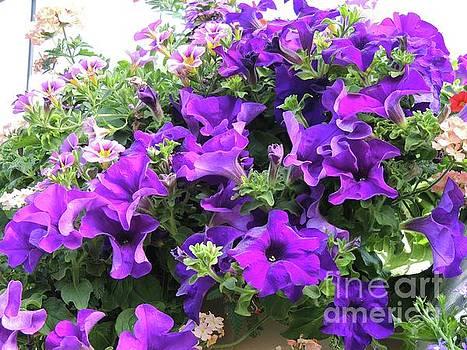 Purple Petunia Basket by Julie Rauscher