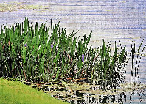 Diann Fisher - Purple Pickerel Weed