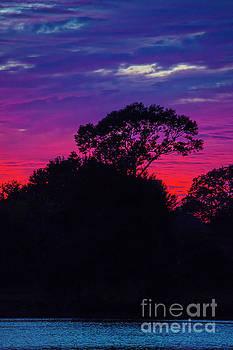 Carter Spade - Purple Sky
