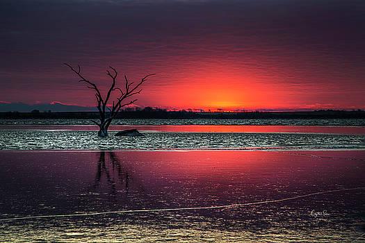 Purple Sunrise by Crystal Socha