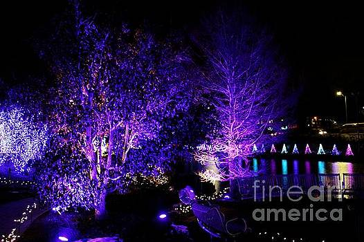 Purple Winter by Denise Irving