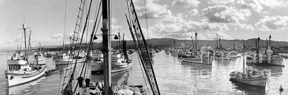 California Views Archives Mr Pat Hathaway Archives - Purse seiner in Monterey Bay Stella Maris, New Limited 1941