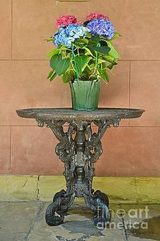 Put on a Pedestal  by Linda Covino