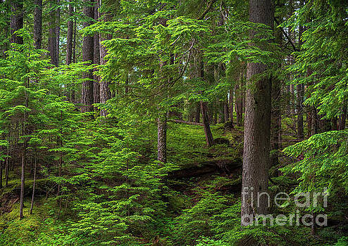 Quiet Forest Layers by Mike Reid