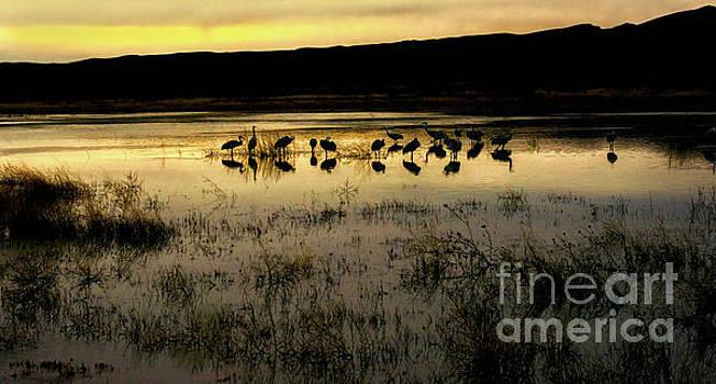 Quiet Reflection by Susan Warren