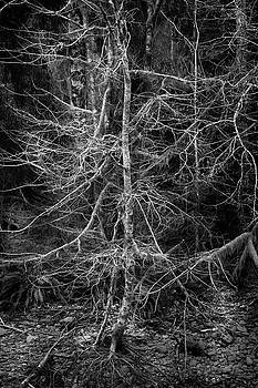 Mike Penney - Quinault River Trees 12