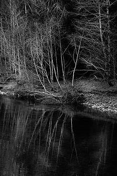Mike Penney - Quinault River Trees 13
