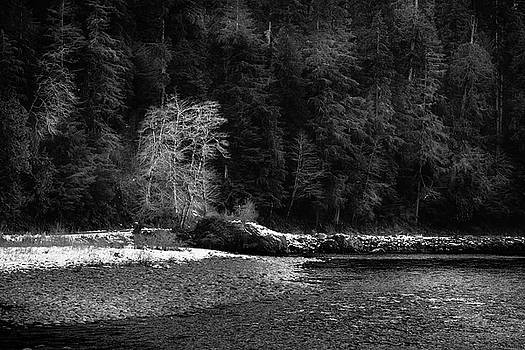 Mike Penney - Quinault River Trees 14