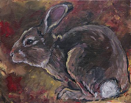 Rabbit by Sherrie Miller
