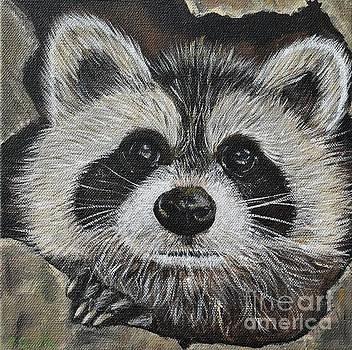 Raccoon by Kirsten Sneath