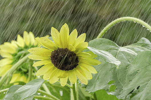 Rain Down on Me by Donna Collins