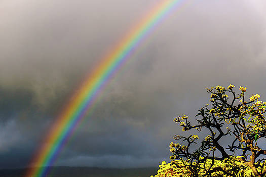 Rainbow and Plumeria by John Bauer
