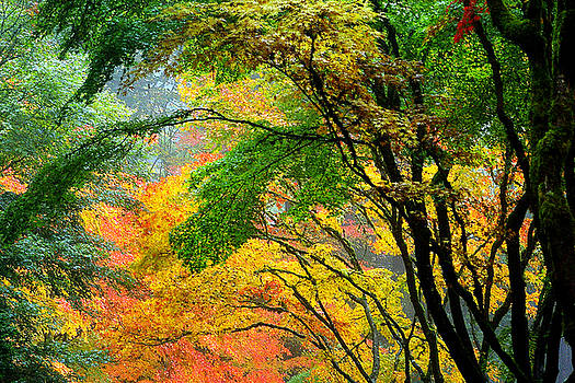Rainbow Autumn by Debra Orlean