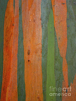 Rainbow Eucalyptus Bark by Charmian Vistaunet