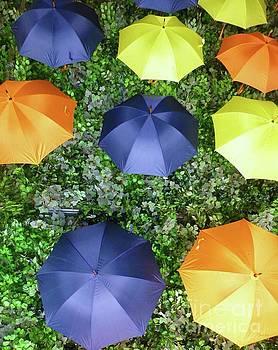 Raining Umbrellas by Barbie Corbett-Newmin